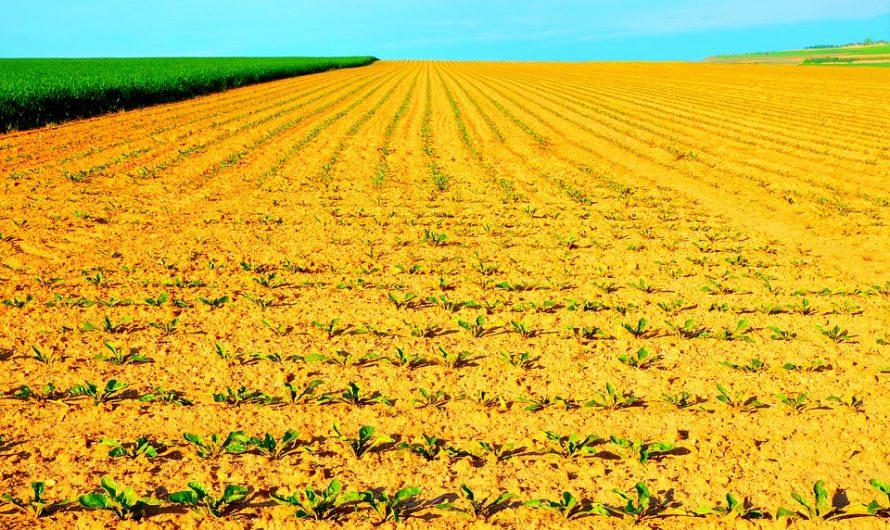 Agrártárca: a támogatások elbírálása egyszerű, a folyósítás pedig gyors lesz