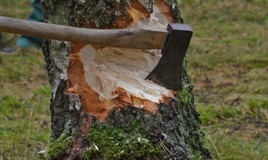 A költési időszakban fát kivágni tilos!